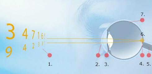 Zdravo oko z normalnim vidom